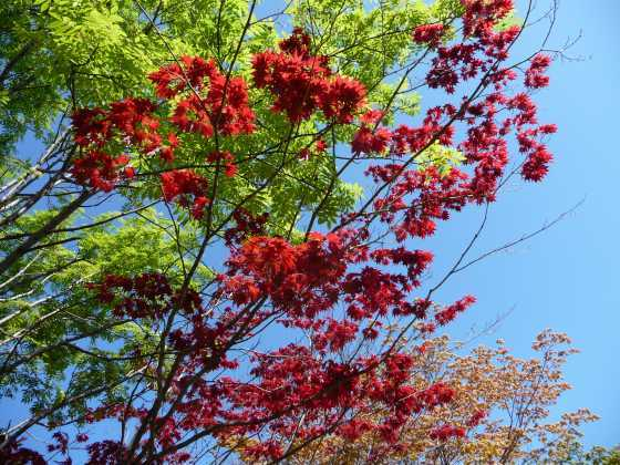 2010029春紅葉1.jpg