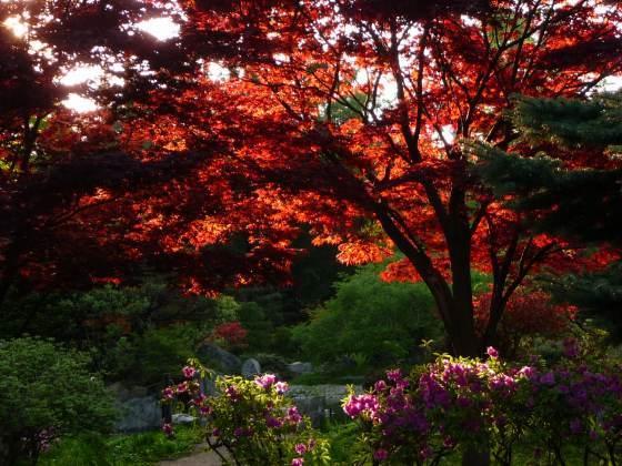 2010029春紅葉4.jpg