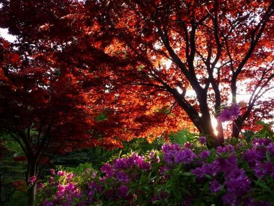 2010029春紅葉5.jpg