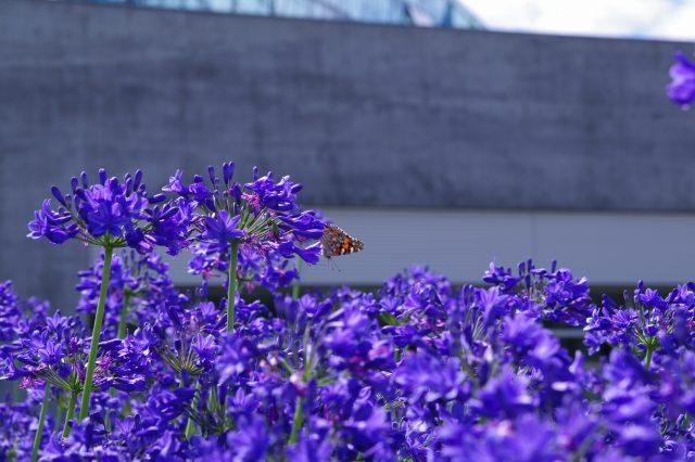 20100806モエレ沼公園24.jpg