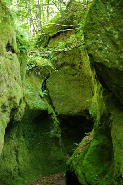 20100806苔の洞門7.jpg