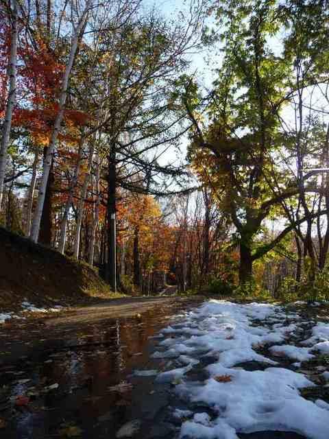 20101029旭山公園1.jpg