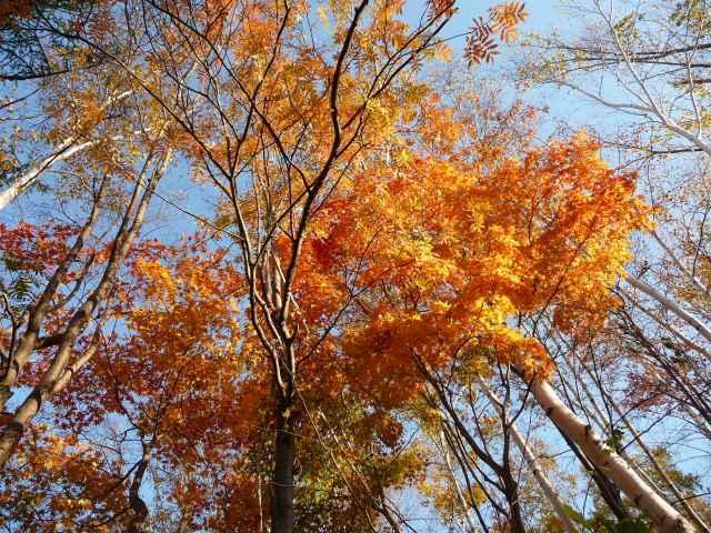 20101029旭山公園2.jpg