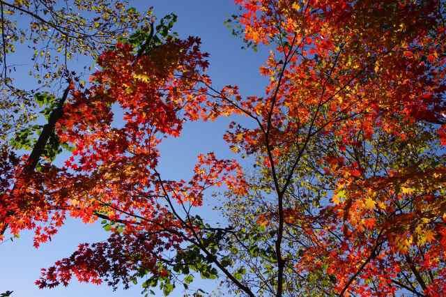 2011年10月20日17支笏湖14.jpg
