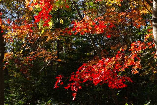 2011年10月20日19支笏湖16.jpg