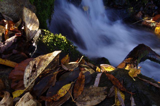 2011年11月11日支笏湖4.jpg