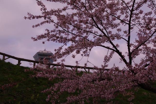 2011年5月5日五稜郭公園am1.jpg