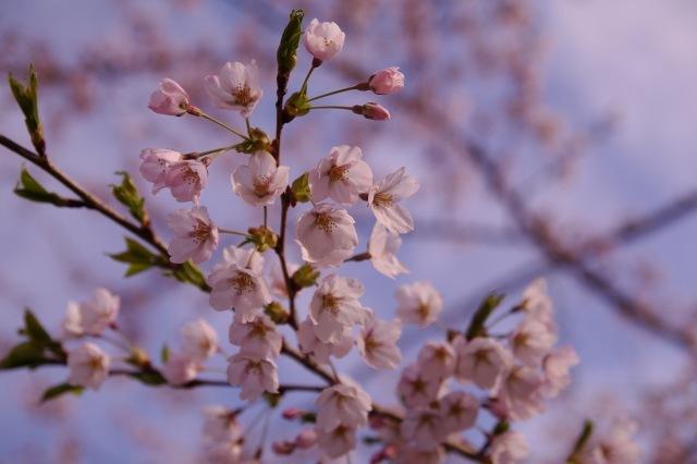 2011年5月5日五稜郭公園am10.jpg