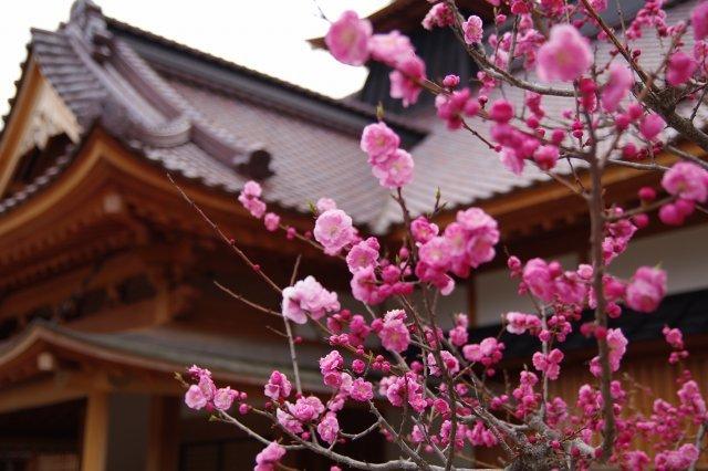 2011年5月5日五稜郭公園am5.jpg
