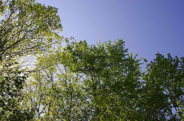2012年5月31日-支笏湖2.jpg