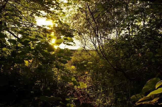2012年6月26日-支笏湖9.jpg