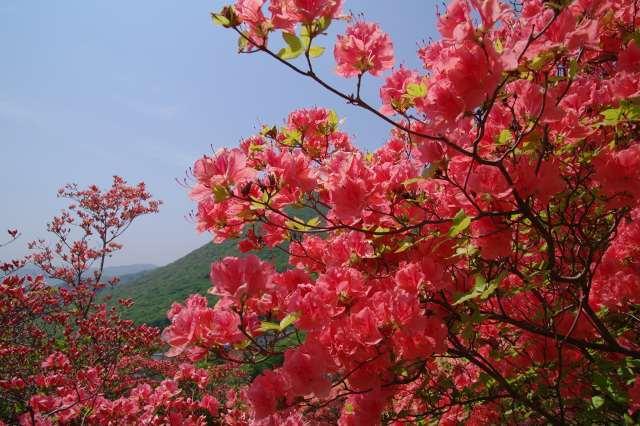 恵山-つつじ2011年6月7日-10.jpg