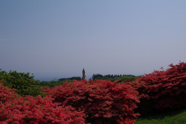 恵山-つつじ2011年6月7日-14.jpg