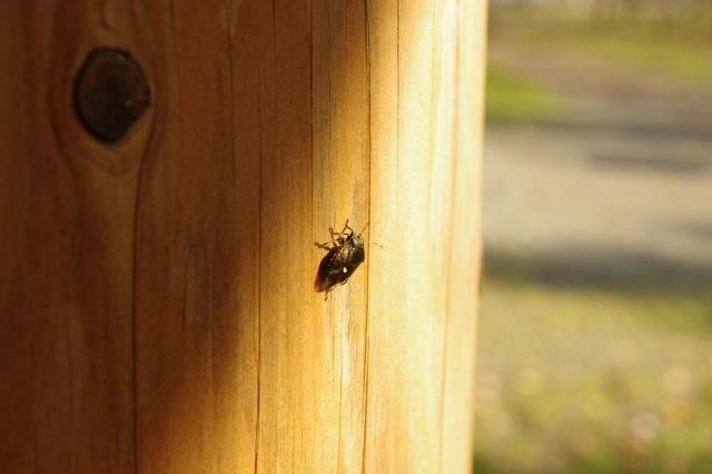 支笏湖2011年10月28日15.jpg