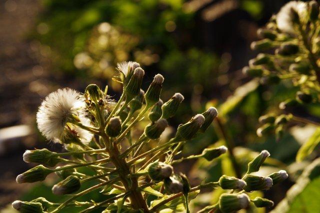 支笏湖2011年5月18日-16.jpg