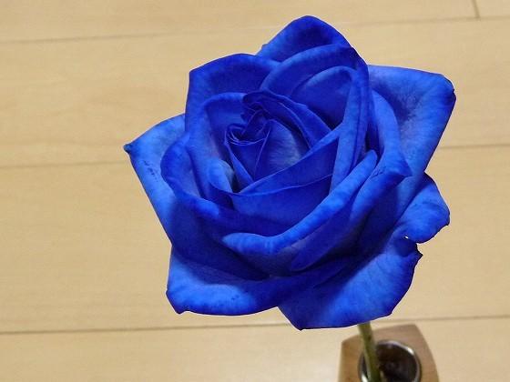 bluerose.jpg